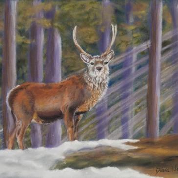 diana-walker-red-deer-stag